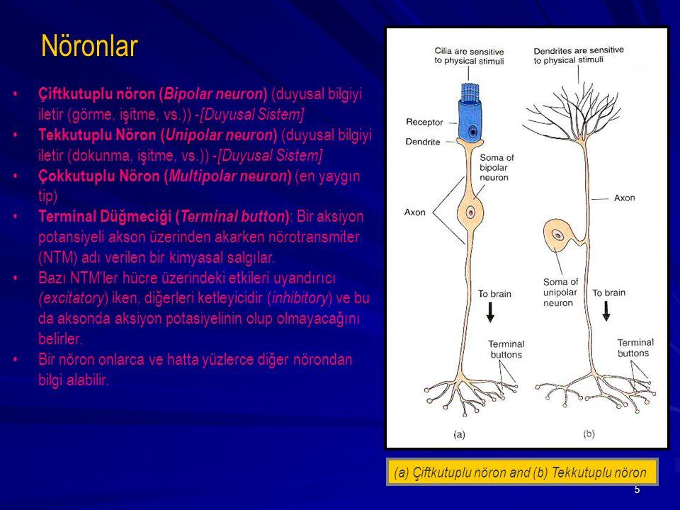 Nöronlar Çiftkutuplu nöron (Bipolar neuron) (duyusal bilgiyi iletir (görme, işitme, vs.)) -[Duyusal Sistem]